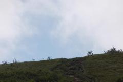 Wycieczka ministrantów - Bieszczady - wyjście na wielką Rawkę (13)